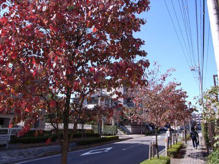 20071028hanamizuki_1024