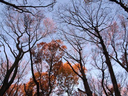 20071216zoukibayashi_1280