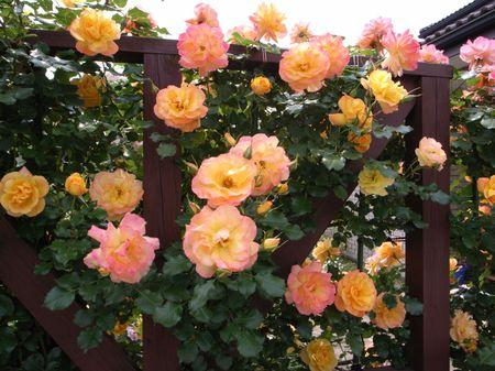 20080518094526_1280_rose