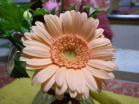 20090112flower_800